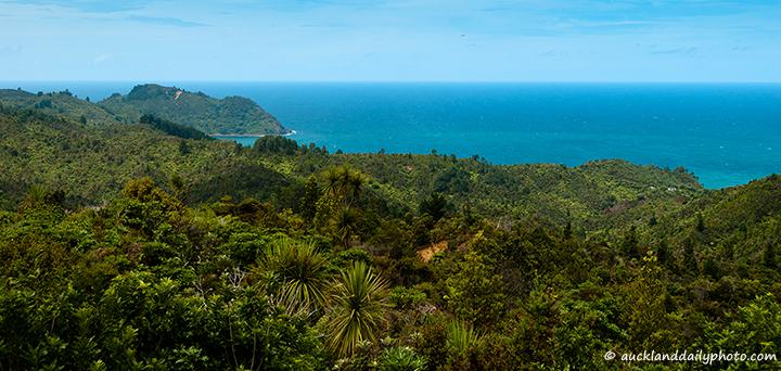 Rainforest and sea