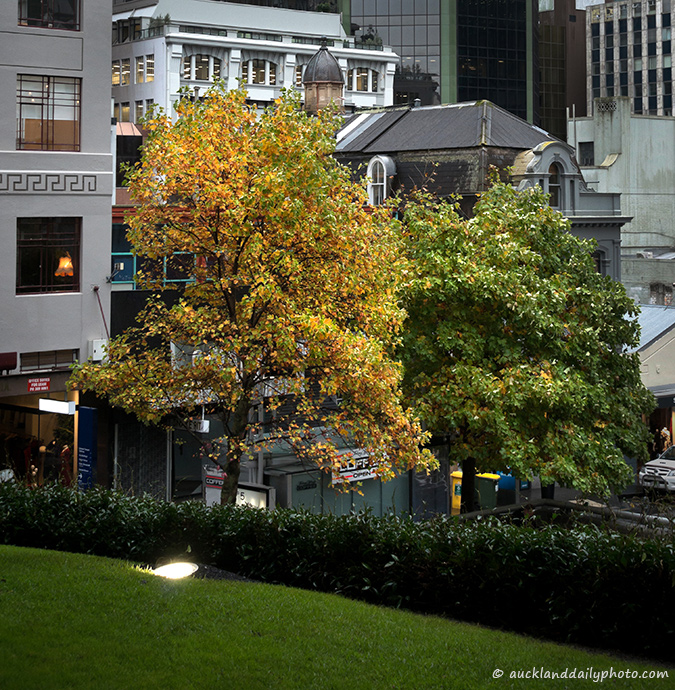 Autumn morning in Auckland