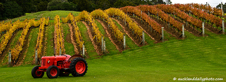 Red tractor - Ascension vineyard Matakana