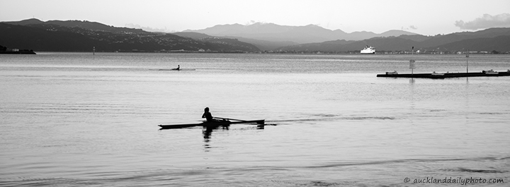 Rowers at Lambton Harbour in Wellington