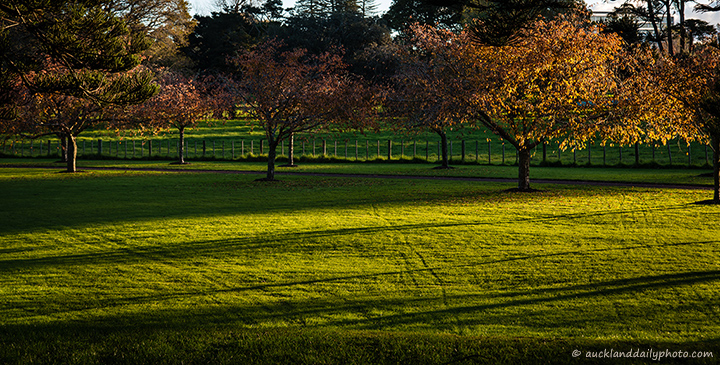 Sundown at Cornwall Park