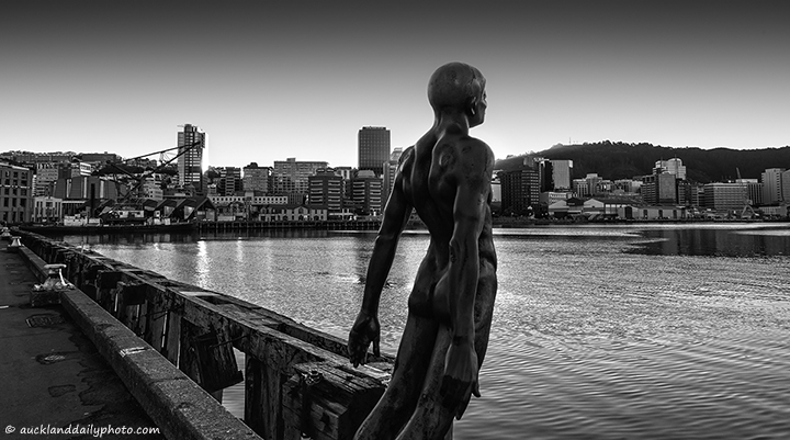 The swimmer in Wellington