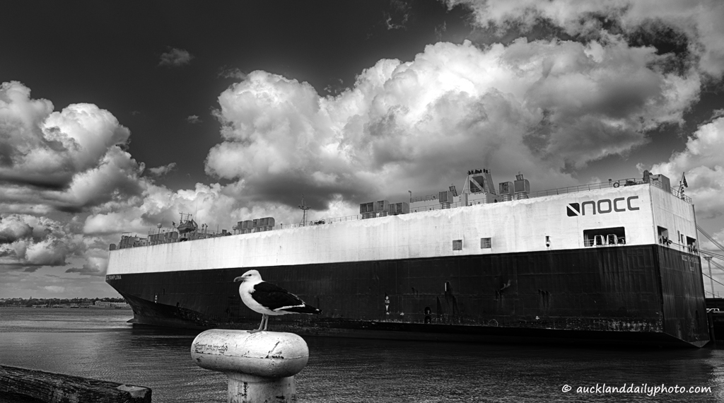 Seagull and cargo ship