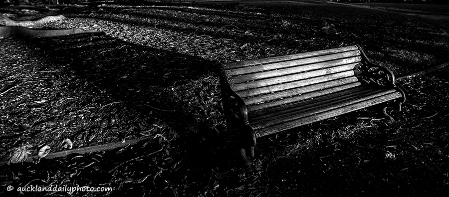 bench in ALbert Park