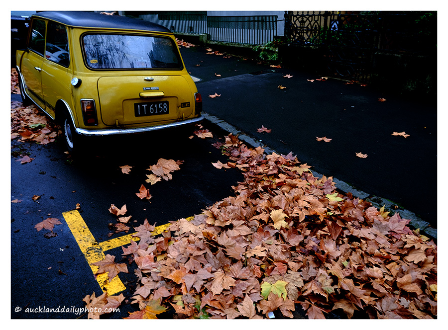 Yellow Mini in Autumn